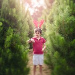 Boy choosing a christmas tree
