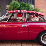 Family with a dog sitting in a red car with a christmas tree on