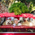 Smiling dog and boy in the backseat of a red car with a christma
